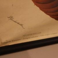 Didactic board Dr Paul Pfurtscheller 1920