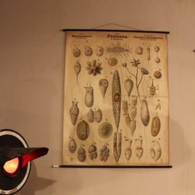 Planche didactique 1880