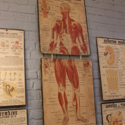 Series of anatomical boards