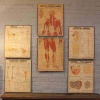 Série de planches anatomiques
