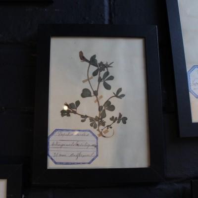 Ancien herbier des années 20