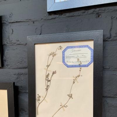 Herbarium collection 1930